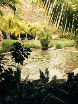 Lily pad pool
