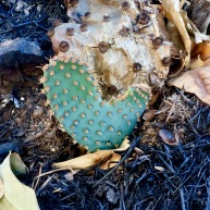 Cactus Love and Hope
